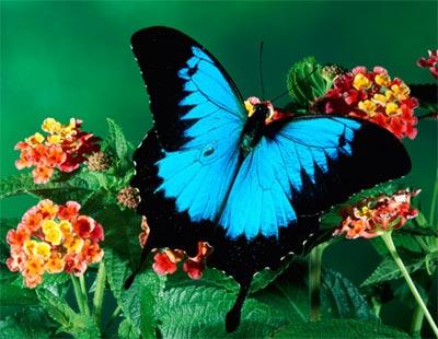 Hình con bướm non tơ đẹp xinh không lông buom.biz khoe gai saoviethot.com